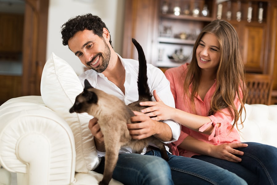 Can Cat People and Dog People Live Happily Ever After? An Investigation.